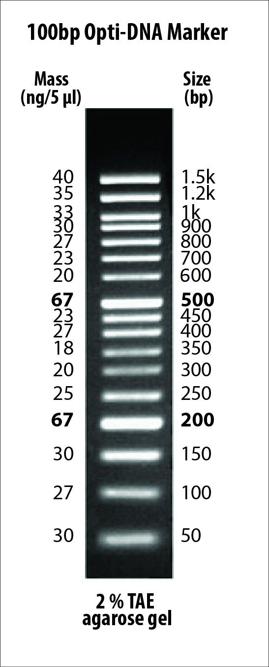 G016 100bp Opti-DNA Marker