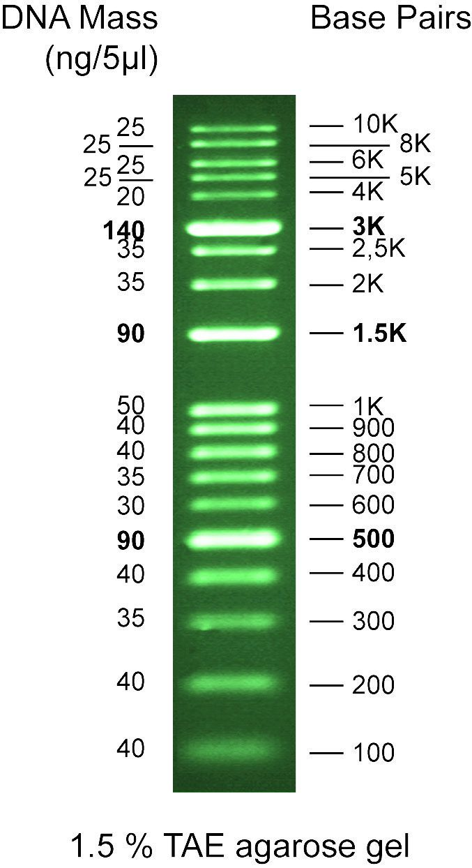 G473	Safe-Green 100bp Opti-DNA Marker