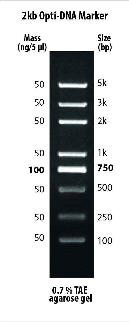 G249 2kb Opti-DNA Marker