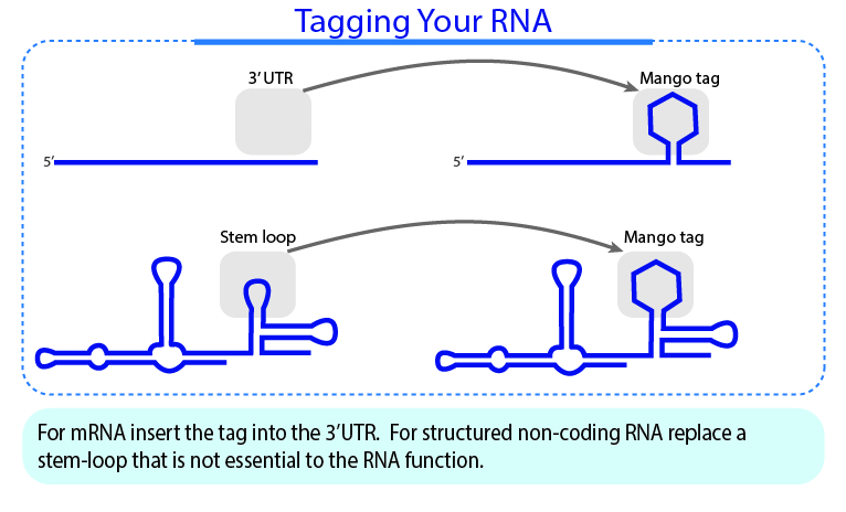 Tagging Your RNA