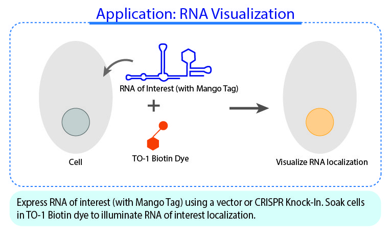Application: RNA Visualization