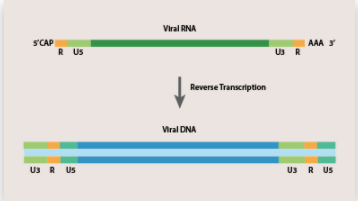 Polymerase Chain Reaction (PCR) - Reverse Transcription Knowledge Base