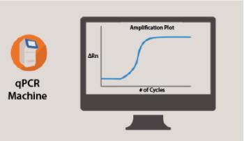 Real-Time PCR/Quantitative PCR (qPCR) Knowledge Base